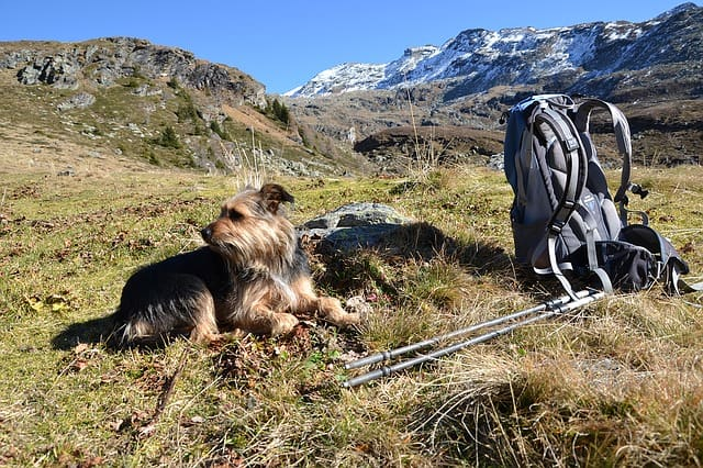 dog out backpacking adds to condensation in tent