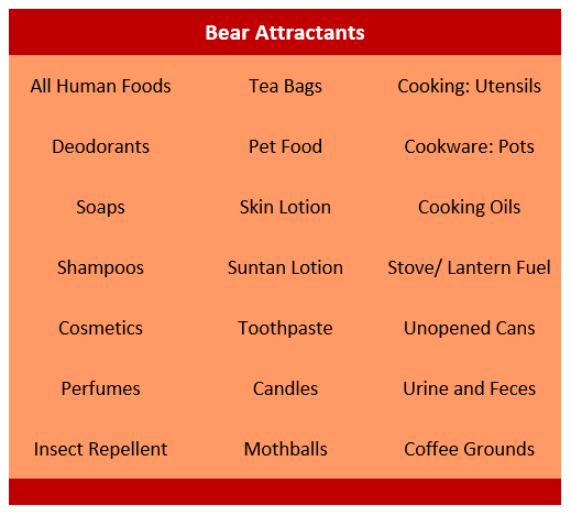 21 bear attractants in a table format