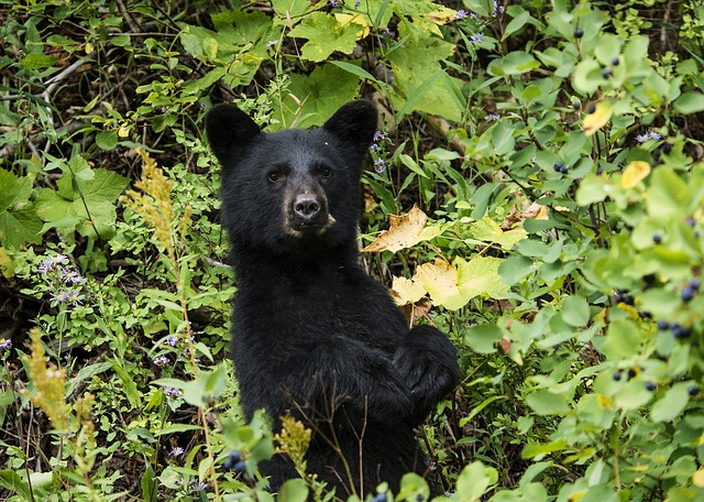 bear canisters save his life