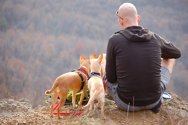 solo backpacking and hiking with pets